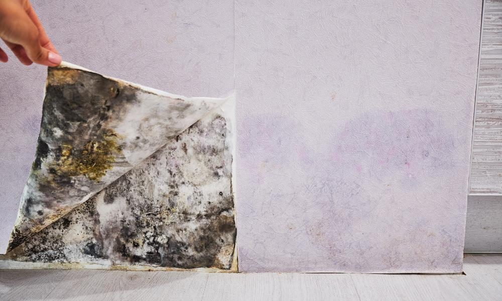 hidden mold under wallpaper