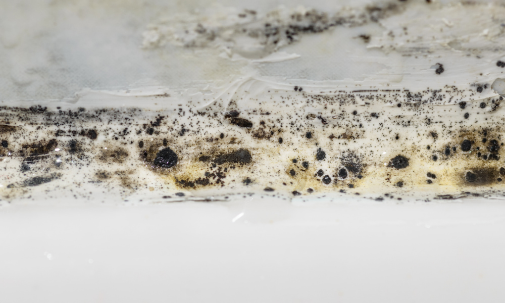 dangerous mold on wall