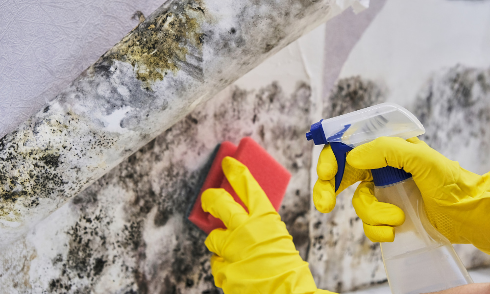trying to prevent mold growth in your home